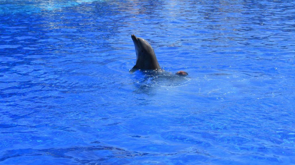 Delfini del Marineland di Antibes