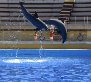delfini di Antibes